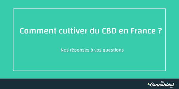 Comment cultiver du CBD en FRANCE